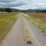 Herzwegfahnderin Weg Toscana Bild