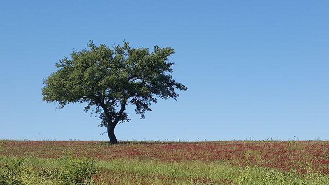 Herzwegfahnderin Baum Bild